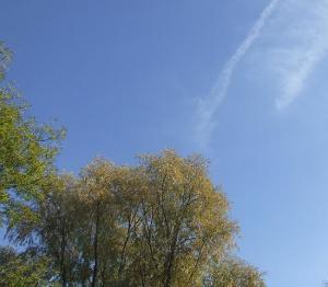 jesienne drzewa na tle blekitnego nieba